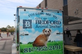 From the Bedford Animal Shelter